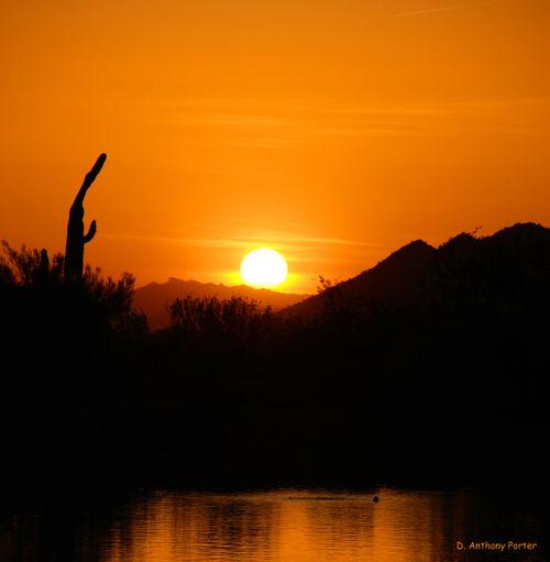 Saguaro's Evening Prayers_edited-2