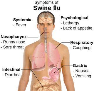 Swine-flu copy