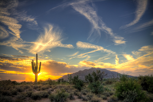 Saguaro Sol, by Jason Corneveaux